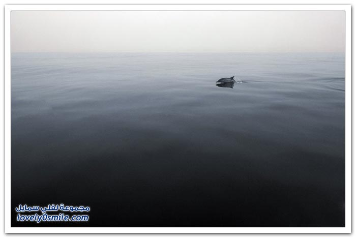 صور لمسابقة ناشونال جيوغرافيك 2013م