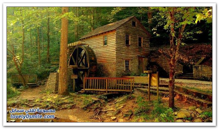 صور لمنازل في أدغال الغابات
